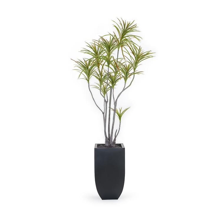 Dracaena Marginata Artificial Plant